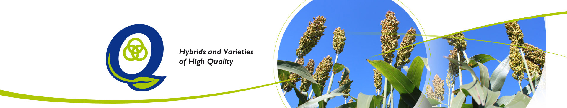 0002 – Quimarsem SA semillas genetica argentina